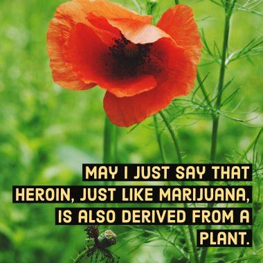 heroin-plant