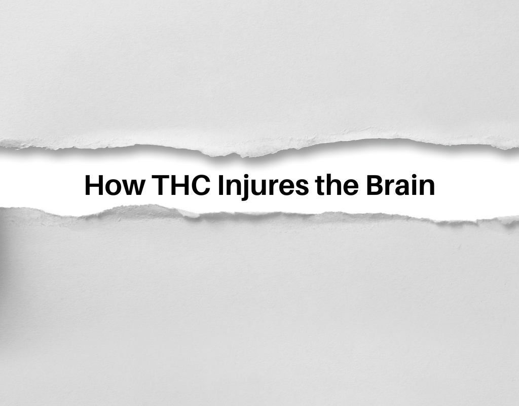 How THC Injures the Brain