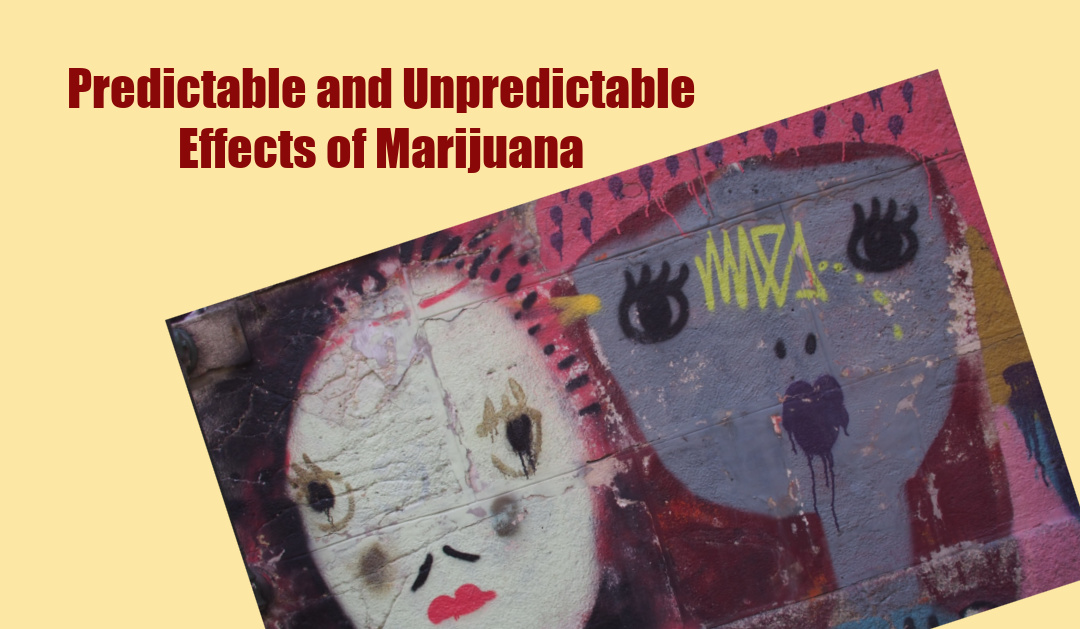 Marijuana – Predictable and Unpredictable Effects