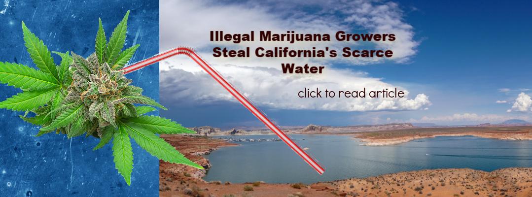 illegal-marijuana-scarce-water